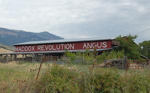 maddox-revolutionary-cattle-barn
