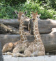 "Ft. Worth Zoo Names New Giraffe Brothers ""Willie & Waylon"""