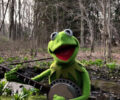 kermit-the-frog-rainbow-connection